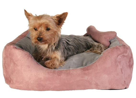 dogs bed (568x410, 46Kb)
